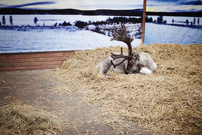 Christmas 2012_08